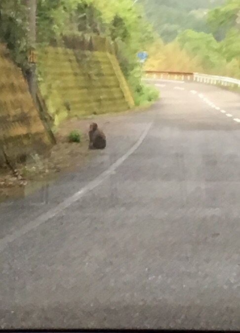 道路の路肩に座る猿